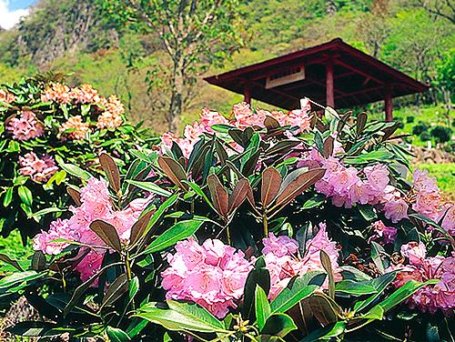 全国石楠花公園