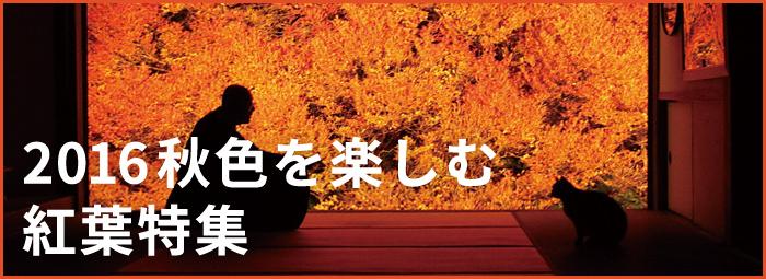 autumn2016_br
