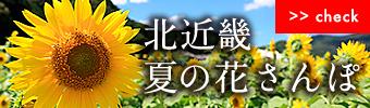 夏の花めぐり