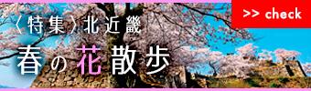 春の花散歩