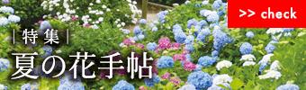夏の花手帖